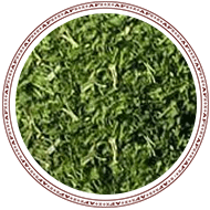Coriander - Leaves