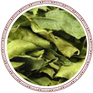 curry-leaves.png, 27kB